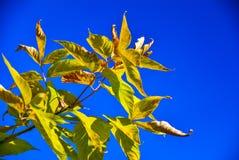 Bordo das folhas de outono no fundo do céu azul Imagem de Stock