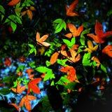 Bordo das folhas do vermelho e do verde Imagem de Stock Royalty Free