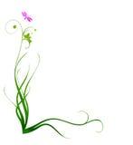 Bordo decorativo dell'erba Fotografia Stock
