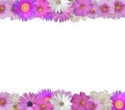 Bordo dei fiori di estate e della primavera Fotografia Stock Libera da Diritti
