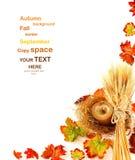 Bordo dei fogli di autunno fotografia stock libera da diritti