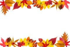 Bordo dei fogli di autunno Immagine Stock Libera da Diritti