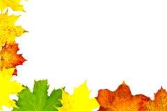 Bordo dei fogli di autunno su bianco Fotografia Stock