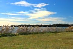 Bordo dei laghi con le canne dell'acqua all'orizzonte fotografie stock