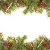 Bordo del cono del pino Immagini Stock Libere da Diritti