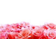Bordo del fiore Fotografie Stock Libere da Diritti
