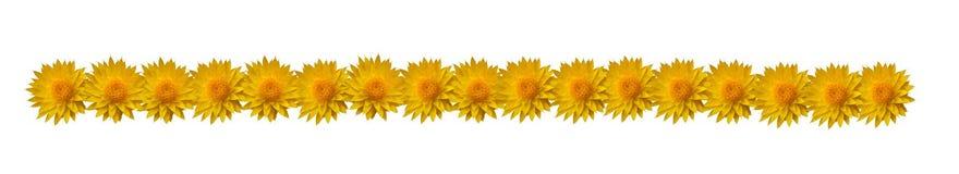 Bordo del fiore fotografie stock