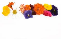 Bordo del fiore Fotografia Stock