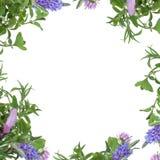 Bordo del fiore dell'erba fotografie stock
