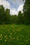 Bordo del fiore della primavera del boschetto della betulla Fotografie Stock