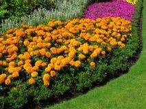 Bordo del Flowerbed dei tageti fotografia stock libera da diritti