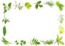 Bordo del foglio dell'erba Fotografia Stock