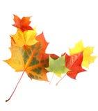 Bordo del foglio di autunno Immagine Stock