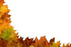 Bordo del foglio di autunno Fotografie Stock Libere da Diritti