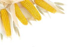Bordo del frumento e del mais su bianco Immagini Stock Libere da Diritti