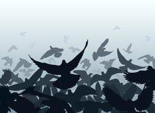 Bordo del piccione Fotografia Stock Libera da Diritti