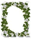 Bordo dell'edera con i gardenias Fotografia Stock Libera da Diritti