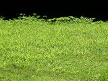 Bordo dell'erba Fotografie Stock Libere da Diritti