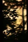 Bordo dell'ombra Immagini Stock