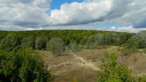 bordo della foresta Fotografie Stock Libere da Diritti