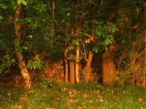 Bordo della foresta fotografia stock