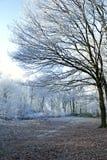 Bordo della foresta di inverno fotografia stock libera da diritti