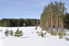 Bordo della foresta nell'orario invernale Fotografia Stock
