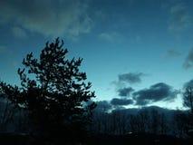 Bordo della foresta scura fotografia stock