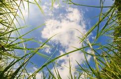 Bordo della natura sulla priorità bassa del cielo blu Immagini Stock Libere da Diritti
