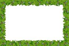 Bordo della pagina dell'edera e dell'agrifoglio. Fotografie Stock
