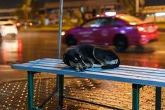 Bordo della strada del cane Fotografie Stock Libere da Diritti