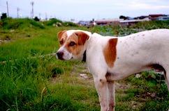 Bordo della strada di area del cane Fotografie Stock Libere da Diritti