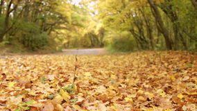 Bordo della strada di autunno del sentiero forestale video d archivio