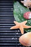 Bordo delle coperture del mare con il foglio verde Fotografie Stock