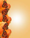 Bordo delle farfalle di monarca Immagini Stock