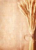 Bordo delle orecchie del frumento sullo copia-spazio della tela da imballaggio background Immagine Stock