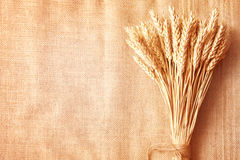 Bordo delle orecchie del frumento sullo copia-spazio della tela da imballaggio background Immagini Stock Libere da Diritti