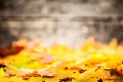Bordo di autunno dai fogli gialli Immagini Stock Libere da Diritti