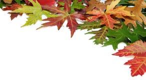 Bordo di caduta con i fogli di autunno Fotografia Stock Libera da Diritti