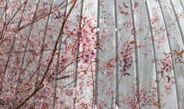 Bordo di legno con il fiore su doppia esposizione tecnica Fotografie Stock Libere da Diritti