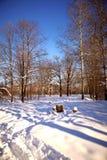 Bordo di legno in inverno Fotografia Stock Libera da Diritti