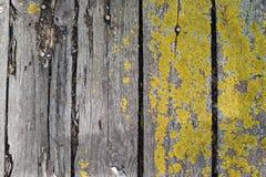 Bordo di legno stagionato anziano con muschio verde Struttura dettagliata Immagini Stock