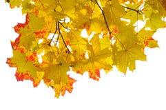 Bordo do outono Foto de Stock