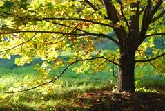 Bordo do outono com folhas ensolarados fotografia de stock