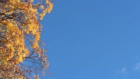 Bordo do outono contra o céu azul Dia ensolarado na floresta do outono video estoque