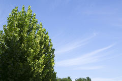 Bordo e céu azul Fotografia de Stock Royalty Free