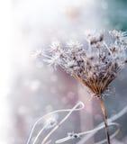 Bordo floreale - decorazione del fiore Immagini Stock Libere da Diritti