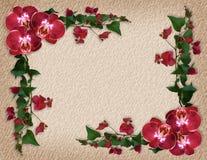 Bordo floreale del Bougainvillea e delle orchidee Fotografie Stock Libere da Diritti