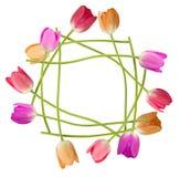 Bordo floreale del tulipano Fotografia Stock