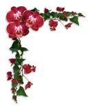 Bordo floreale rosso del Bougainvillea e delle orchidee Fotografia Stock